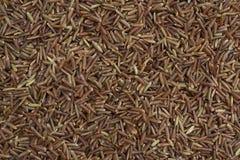 röd rice Royaltyfri Bild