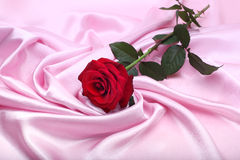 Röd ro på rosa silk Arkivfoto