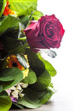 Röd ros av buketten Royaltyfri Fotografi