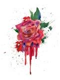 Röd ros för vattenfärg Arkivbilder
