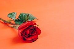 Röd ros, gammal filmstil Arkivbild