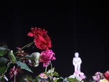 Röd ros i natthimmel för ramaen 6th arkivfoton