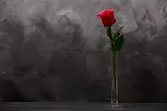 Röd ros i vas på mörk grå lantlig träbakgrund Hem- dekor Royaltyfri Bild