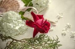 Röd ros med den vita vanliga hortensian på eukalyptusfilial- och havsskal Royaltyfri Foto