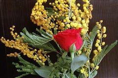 Röd ros med mimosan på en bakgrund av Wenge Arkivbilder
