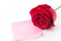 Röd ros med rosa färgpappersanmärkningen Royaltyfria Bilder