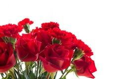 Röd ros och nejlika som isoleras på vit bakgrund Royaltyfri Bild