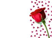 Röd ros och rosa hjärtor som isoleras på vit bakgrund Valentine Day bröllopkort man för begreppskyssförälskelse till kvinnan Lekm royaltyfri fotografi