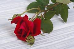 Röd ros på en bakgrund av träbräden Arkivbilder