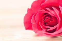 Röd ros på en träbakgrund royaltyfri fotografi