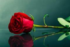 Röd ros på exponeringsglas Arkivfoton