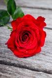 Röd ros på gammalt wood förälskelsebegrepp Royaltyfri Bild