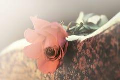 Röd ros på gravstenen Arkivbild