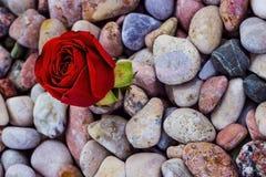 Röd ros på havsstenar Royaltyfria Foton