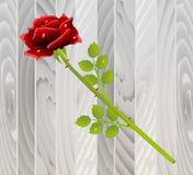 Röd ros på trätextur royaltyfri illustrationer