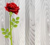 Röd ros på trätextur stock illustrationer