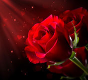 Röd ros. St., valentin dag Royaltyfri Bild