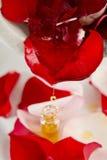 Röd rosblomma med rosolja Arkivbild