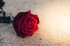 Röd rosblomma på stengolv i valentin dag Royaltyfria Foton