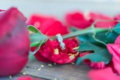 Röd rosblomma på trägolv i valentin dag Royaltyfria Foton