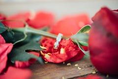 Röd rosblomma på trägolv i valentin dag Royaltyfri Fotografi