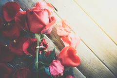 Röd rosblomma på trägolv i valentin dag Arkivbild