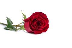 Röd rosblommanärbild som isoleras på den inklusive vita snabba banan Arkivfoton