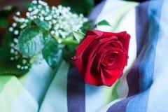 Röd rosblomning, med närbild på kronblad som lägger på en randig kudde Royaltyfri Foto