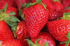 Röd söt jordgubbetextur som bakgrund Jordgubbar mönstrar röda hela stora jordgubbar Royaltyfri Fotografi