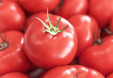 Röd saftig mogen tomat Royaltyfri Fotografi