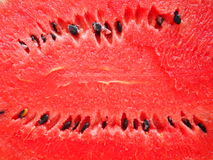 Röd saftig och mogen vatten-melon Arkivbild