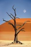 Röd sanddyn, döda Vlei, Namibia Arkivbilder