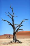 Röd sanddyn, döda Vlei, Namibia Royaltyfria Foton