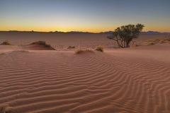 Röd sanddyn efter solnedgång royaltyfri foto