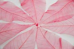 Röd sidastrukturbakgrund Royaltyfria Bilder