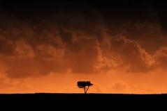 röd silhouetted tree för effekt Royaltyfri Foto