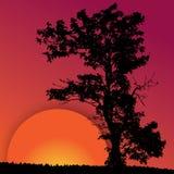 röd silhouettesolnedgångtree royaltyfri illustrationer