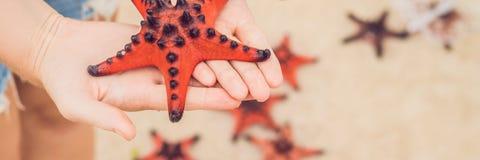 Röd sjöstjärna i händerna, bredvid havsBANRET, långt format royaltyfri bild