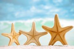 Röd sjöstjärna med havet, stranden, himmel och seascape Royaltyfri Bild