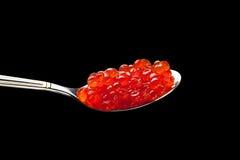 Röd sked för kaviar Fotografering för Bildbyråer