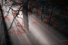 Röd skog fotografering för bildbyråer