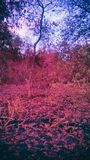 Röd skog Arkivbilder