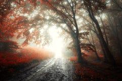 Röd skog med dimma i höst arkivfoton