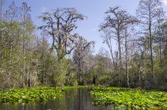 Röd slinga för mellersta gaffelSuwannee flod, fristad för djurliv för Okefenokee träsk nationell royaltyfri bild