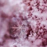 röd snowflake Fotografering för Bildbyråer