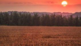 Röd solnedgång över en wheatfield Royaltyfria Bilder
