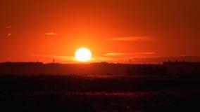 Röd solnedgång över vetefält Arkivbild