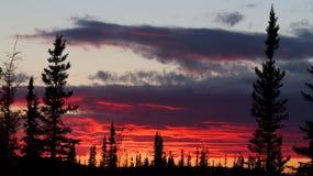 Röd solnedgång bak skog Fotografering för Bildbyråer