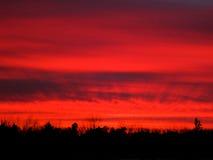 Röd solnedgångträdkontur Arkivbilder
