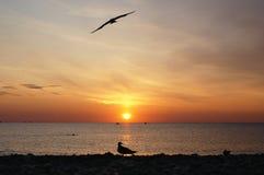 Röd soluppgång på havet med fågelkonturn arkivfoton